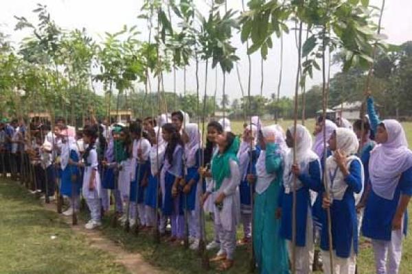 মীরগঞ্জ হাইস্কুলে বৃক্ষরোপণ উৎসব