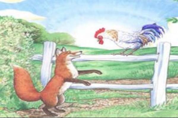 অস্বাভাবিক ঘটনা; মুরগীর আক্রমণে শিয়ালের করুন মৃত্যু!