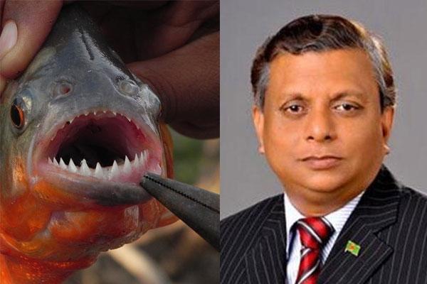 'মানুষখেকো' মাছ জব্দ করে পুড়িয়ে দিলেন মেয়র আরিফ