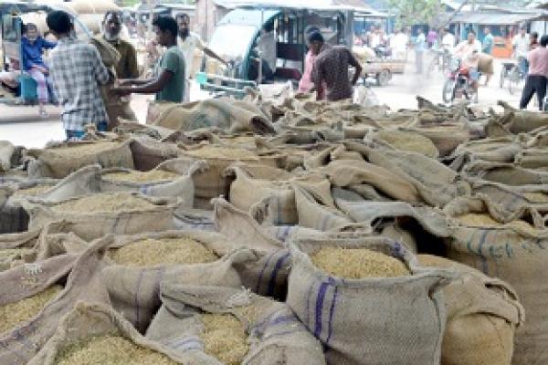 ঠাকুরগাঁওয়ে ধানের মণ ৩০০ টাকা, কৃষকের কান্না