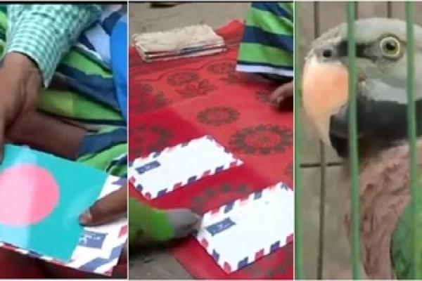 চলতি বিশ্বকাপে টানা তৃতীয়বারের মতো মিলে গেল জ্যোতিষী টিয়া 'মদনা'র ভবিষ্যদ্বাণী