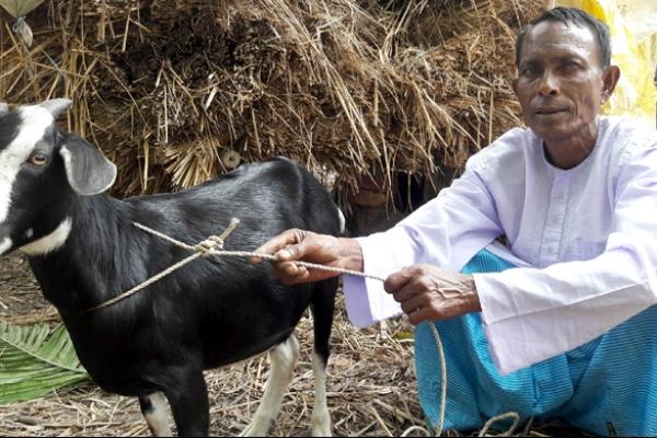 প্রধানমন্ত্রীর দীর্ঘায়ু কামনা করে খাসি কোরবানি দিলেন আকন্দ