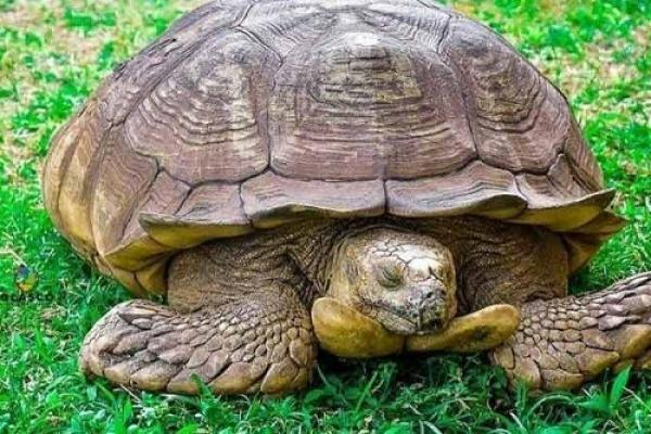 ৩৪৪ বছর বয়সে মা'রা গেল বিশ্বের সবচেয়ে বয়স্ক কচ্ছপ!
