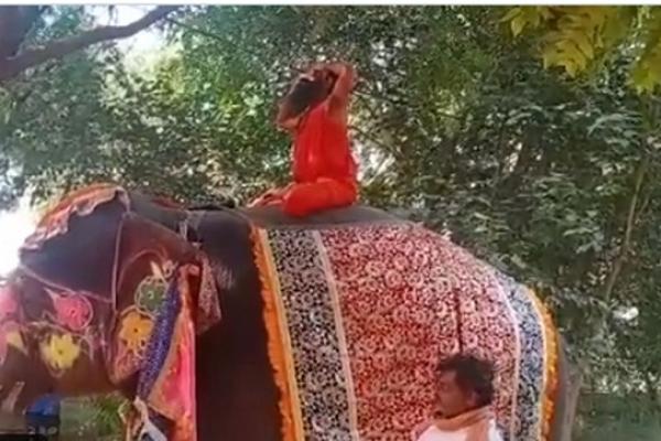 হাতির পিঠে  ব্যায়াম দেখাতে গিয়ে মাটিতে পড়ে মারাত্ম'ক আহ'ত বাবা রামদেব