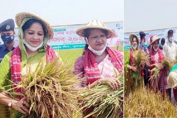 কৃষককের এক একর জমির ধান কেটে দিয়েছেন দুই নারী সংসদ সদস্য