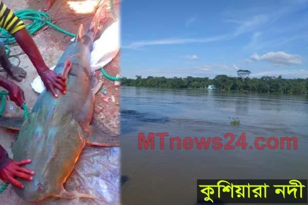 জালে ধরা পড়লো ৪৭ কেজির বাঘাইড় মাছ, বিক্রি হলো ৪৯ হাজার টাকা