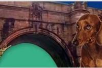 'ভূতুড়ে' ব্রিজ থেকে ৬০০ কুকুরের মরণ-ঝাঁপ, আতঙ্কিত মনোবিদরা!