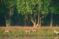 সুন্দরবনে দাপিয়ে বেড়াচ্ছে ১৮ বনদস্যু বাহিনী, আতংকে জেলে-বাওয়ালীরা