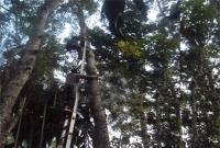 ৭০ ফুট গাছের মগডালে এ কী কাণ্ড!