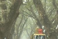 যশোর-রোডের-প্রায়-আড়াই-হাজার-শতবর্ষী-গাছ-কি-সত্যিই-কেটে-ফেলা-হবে-