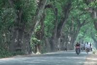 যশোর-রোডের-শতবর্ষী-গাছ-কাটা-যাবে-না-হাইকোর্ট