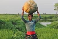 জাম্বো সাইজের মিষ্টি কুমড়ায় নজর কারছে আড়িয়াল বিল