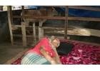 বসতঘর থেকে বের করে দিয়ে অসুস্থ মাকে গোয়ালঘরে রাখলেন এক ছেলে