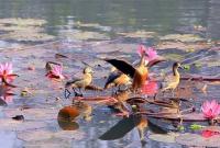 জাহাঙ্গীরনগর-বিশ্ববিদ্যালয়ে-অতিথি-পাখি-দেখতে-টিকিট-লাগবে-পরিকল্পনামন্ত্রী