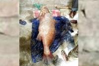 চট্টগ্রামে-পোয়া-মাছটি-বিক্রি-হলো-১০-লাখ-টাকায়-