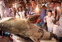 সিলেটে জালে উঠল ১৪০ কেজি বাঘাইড় মাছ! দাম  ৩ লাখ ৫০ হাজার টাকা!