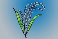 চাঁপাইনবাবগঞ্জের ২টি আসনে ধানের শীষের জয়