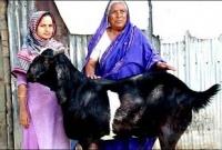 প্রধানমন্ত্রী-শেখ-হাসিনাকে-উপহার-দিতে-চাই