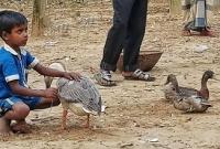 হায়রে দারিদ্রতা : প্রিয় হাঁসটি না বেচলে ঈদের জামা হবে না
