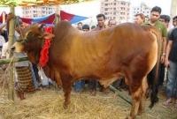 ৩০০-টাকা-কেজি-দরে-বিক্রি-হচ্ছে-কোরবানির-গরু