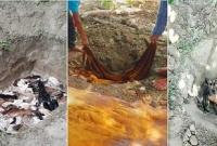রাগে-ক্ষোভে চামড়া মাটিতে পুঁতে ফেলেছেন কোরবানিদাতারা