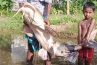 জালে-ধরা-পরলো-৪২-কেজি-ওজনের-বাঘআইড়