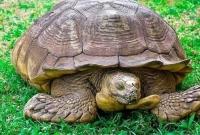 ৩৪৪-বছর-বয়সে-মা-রা-গেল-বিশ্বের-সবচেয়ে-বয়স্ক-কচ্ছপ-