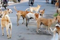 রাস্তার-কুকুর-ইশারা-বোঝে-কামড়-থেকে-বাঁচার-উপায়-জেনে-নিন