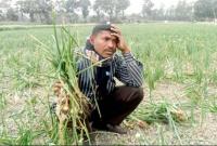 ক্ষেত-থেকে-চুরি-হচ্ছে-পেঁয়াজ-দিশেহারা-রাজশাহীর-কৃষকরা