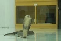 চট্টগ্রাম-মেডিকেল-কলেজে-'দুধ-কলা'-দিয়ে-পোষা-হচ্ছে-সাপ