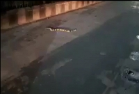 লকডাউনে-ফাঁকা-রাস্তায়-শঙ্খিনী-সাপ