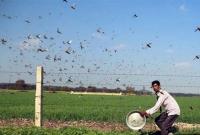 পঙ্গপাল-সং'কটের-সমাধান-পেল-পাকিস্তানের-কৃষকরা-হবে-আয়ও