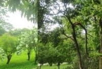 দীর্ঘসময়-মানুষের-পদচারণা-নেই-গোটা-সোহরাওয়ার্দী-উদ্যান-এখন-সবুজ-গালিচা