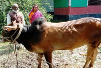 প্রধানমন্ত্রীর-নামে-১১-বছর-ধ-রে-কোরবানি-দিচ্ছেন-টাঙ্গাইলের-জাবেদ
