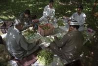 আপেলের-পর-এবার-কাশ্মীরে-আঙুরেরও-ব্যাপক-ফলন