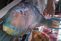 গভীর বঙ্গোপসাগরে ধরা পড়ল বিরল প্রজাতির 'টিয়া মাছ'