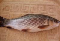 ম্যাজিকের-মতো-স্ট্রোকের-ঝুঁকি-কমায়-রুই-মাছ-কিন্তু-কতটুকু-খাবেন-