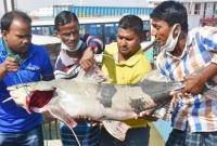 পদ্মায়-ধরা-পড়লো-২৯-কেজির-মাছ