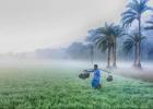 শিগগিরই-দেশে-আসছে-তীব্র-শৈত্যপ্রবাহ