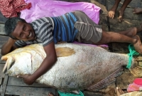 সুন্দরবনে-ধরা-সেই-মাছটি-বিক্রি-হলো-৪৩-লাখ-টাকায়